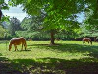 French property for sale in CHAUM, Haute Garonne - €495,000 - photo 4