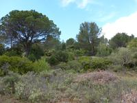 French property for sale in CESSERAS, Herault - €20,000 - photo 4