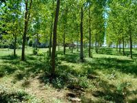 French property for sale in LE BUISSON DE CADOUIN, Dordogne - €195,000 - photo 3