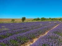 French property, houses and homes for sale inTHOARDAlpes_de_Hautes_Provence Provence_Cote_d_Azur